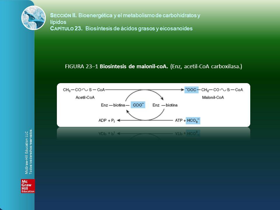 FIGURA 23–1 Biosíntesis de malonil-coA. (Enz, acetil-CoA carboxilasa.)