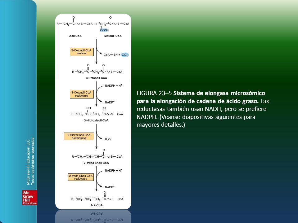 FIGURA 23–5 Sistema de elongasa microsómico para la elongación de cadena de ácido graso. Las reductasas también usan NADH, pero se prefiere NADPH. (Veanse diapositivas siguientes para mayores detalles.)