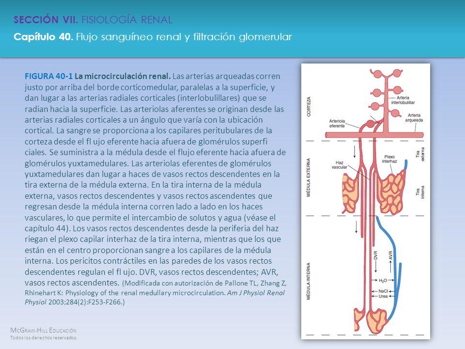 FIGURA 40-1 La microcirculación renal