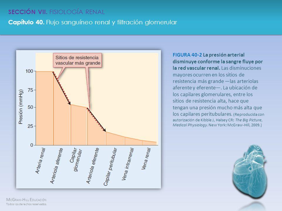 FIGURA 40-2 La presión arterial disminuye conforme la sangre fluye por la red vascular renal.