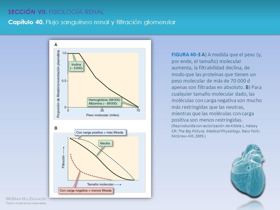 FIGURA 40-3 A) A medida que el peso (y, por ende, el tamaño) molecular aumenta, la filtrabilidad declina, de modo que las proteínas que tienen un peso molecular de más de 70 000 d apenas son filtradas en absoluto.