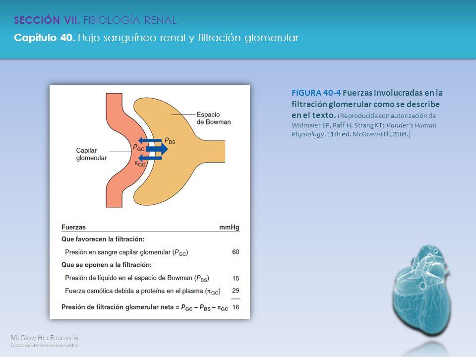 FIGURA 40-4 Fuerzas involucradas en la filtración glomerular como se describe en el texto.