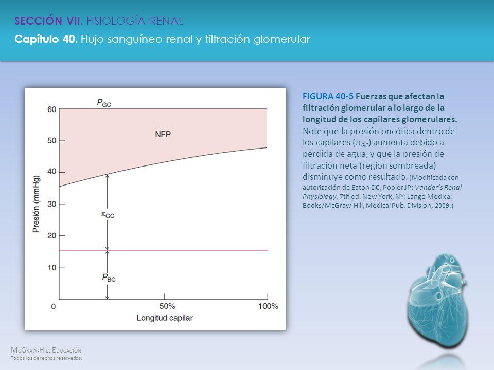 FIGURA 40-5 Fuerzas que afectan la filtración glomerular a lo largo de la longitud de los capilares glomerulares.