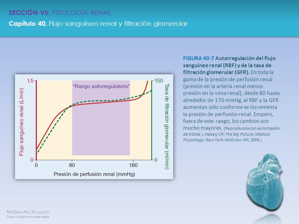 FIGURA 40-7 Autorregulación del flujo sanguíneo renal (RBF) y de la tasa de filtración glomerular (GFR).