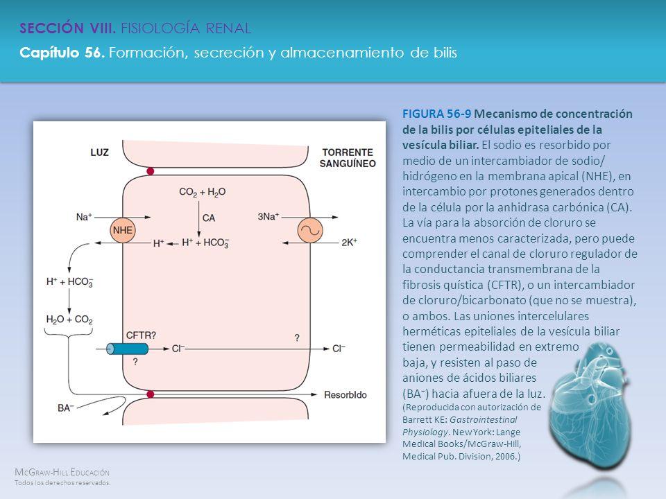 FIGURA 56-9 Mecanismo de concentración de la bilis por células epiteliales de la vesícula biliar.