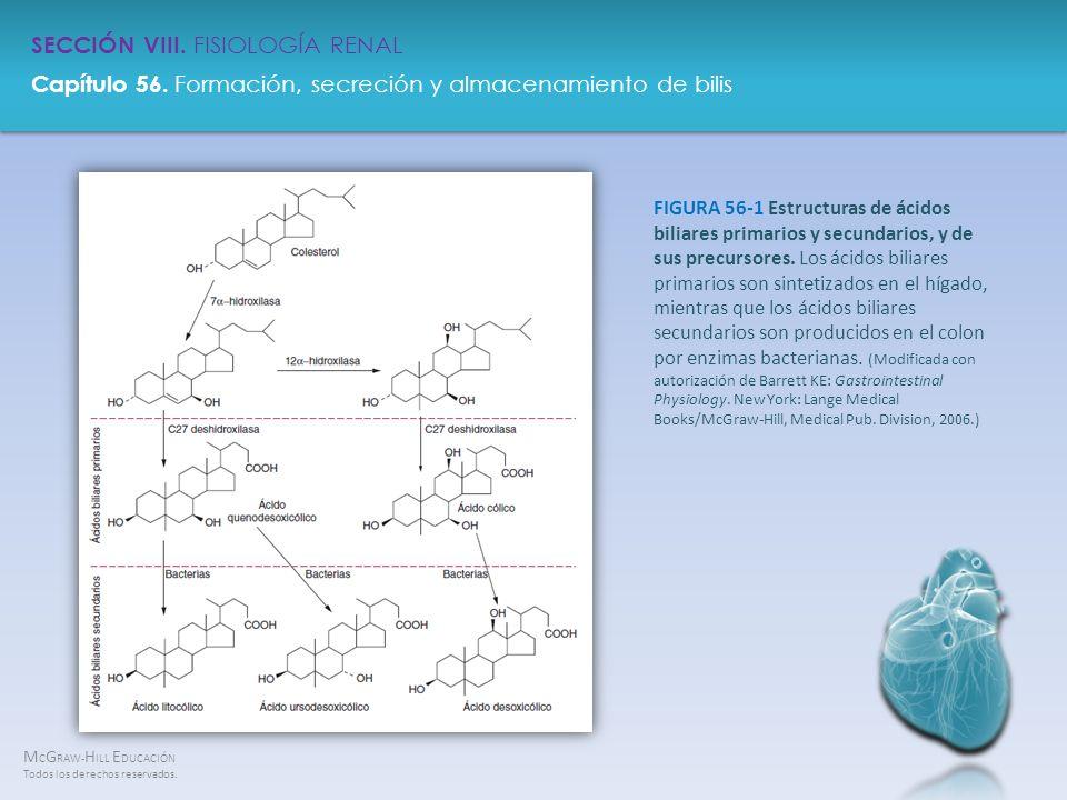 FIGURA 56-1 Estructuras de ácidos biliares primarios y secundarios, y de sus precursores.