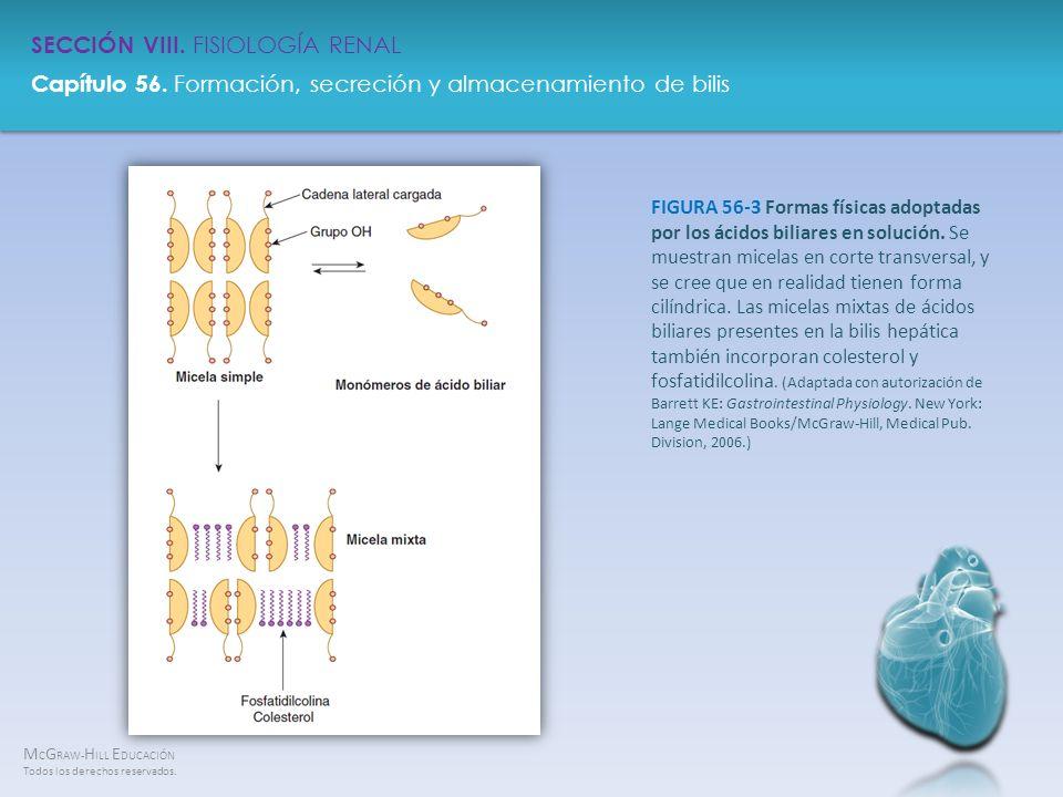 FIGURA 56-3 Formas físicas adoptadas por los ácidos biliares en solución.
