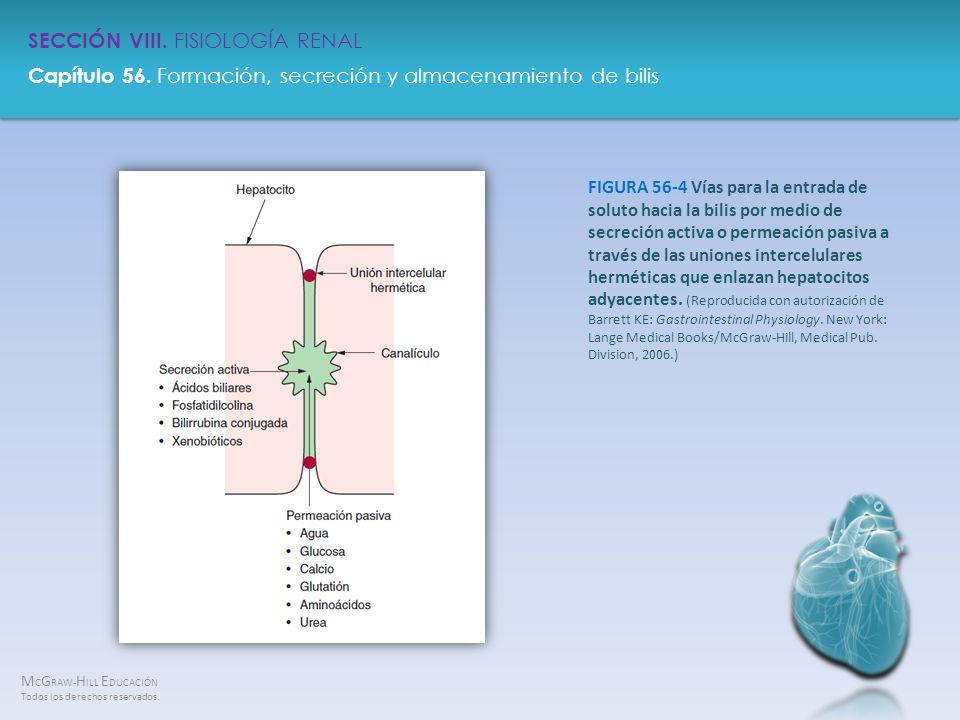 FIGURA 56-4 Vías para la entrada de soluto hacia la bilis por medio de secreción activa o permeación pasiva a través de las uniones intercelulares herméticas que enlazan hepatocitos adyacentes.