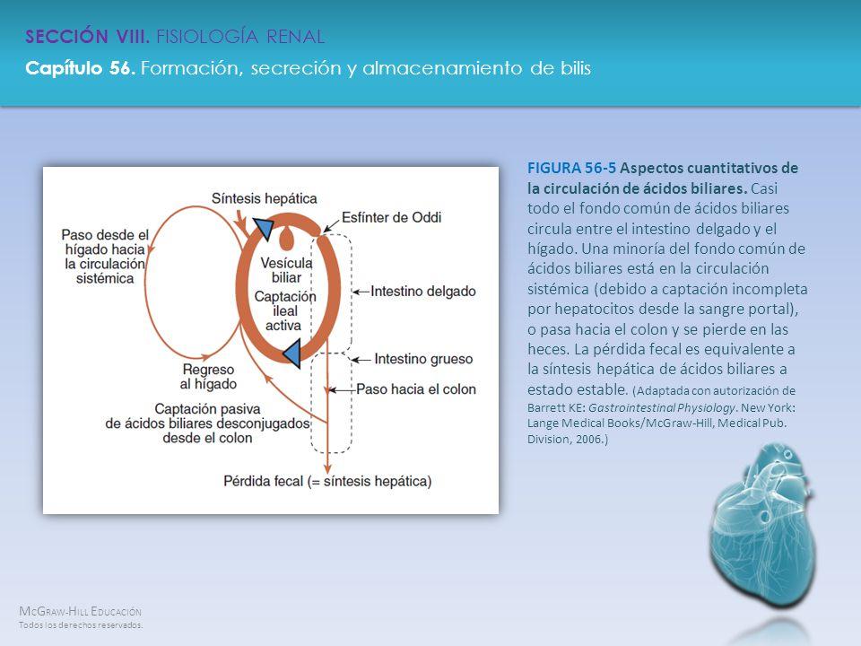 FIGURA 56-5 Aspectos cuantitativos de la circulación de ácidos biliares.