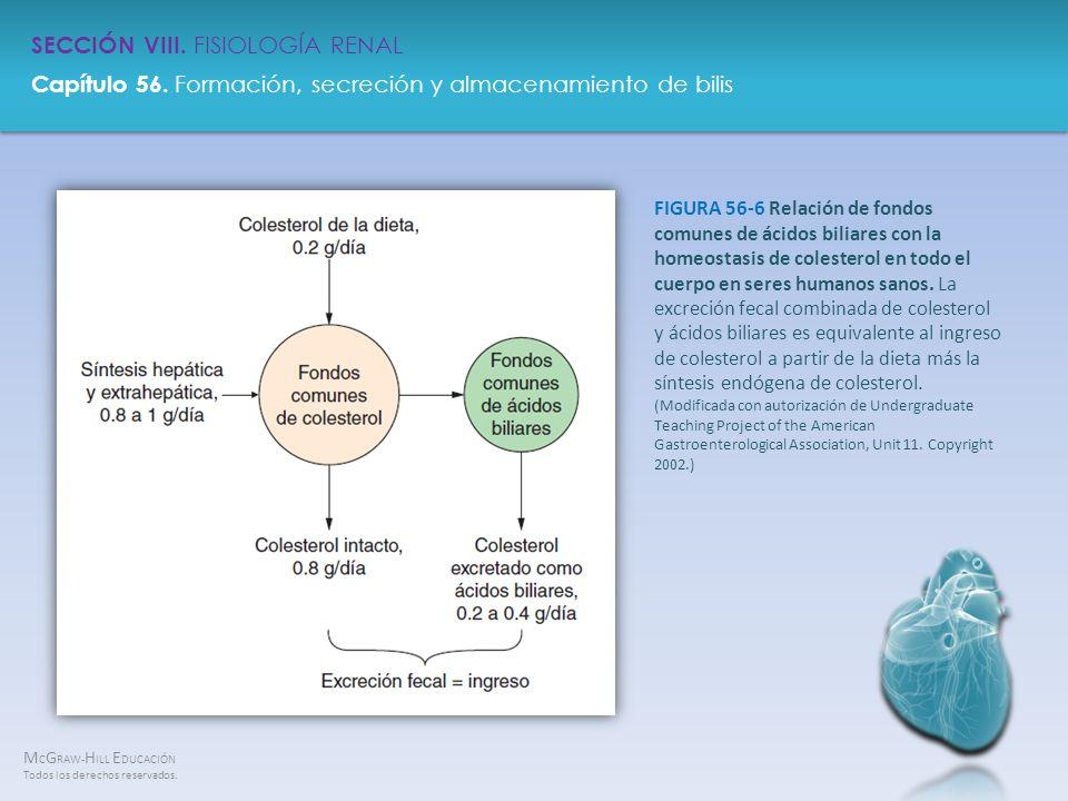 FIGURA 56-6 Relación de fondos comunes de ácidos biliares con la homeostasis de colesterol en todo el cuerpo en seres humanos sanos.