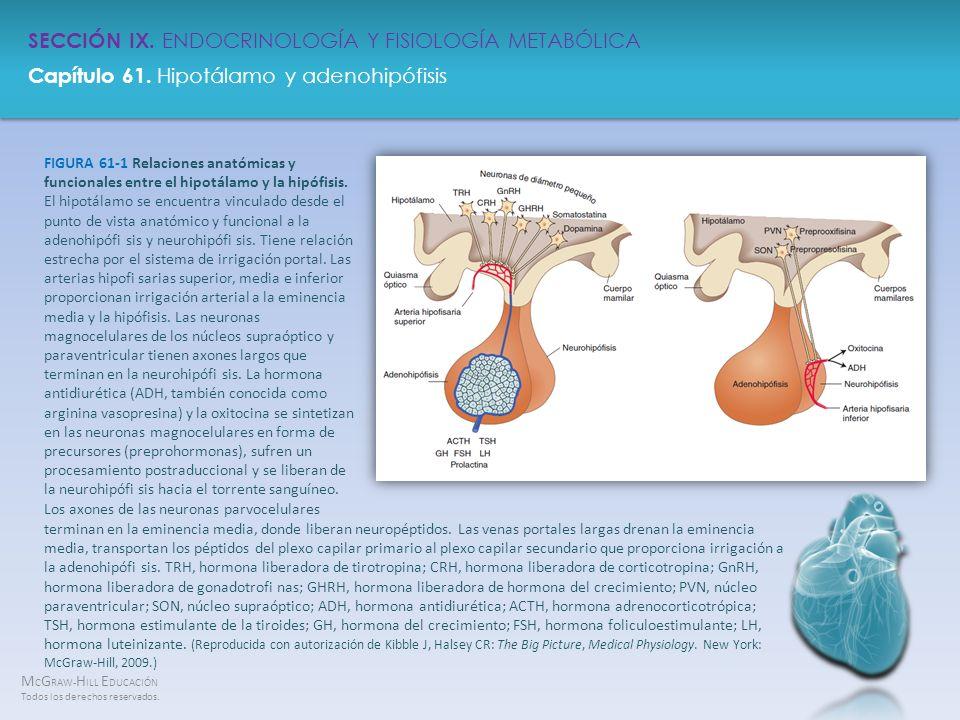 FIGURA 61-1 Relaciones anatómicas y funcionales entre el hipotálamo y la hipófisis. El hipotálamo se encuentra vinculado desde el punto de vista anatómico y funcional a la adenohipófi sis y neurohipófi sis. Tiene relación estrecha por el sistema de irrigación portal. Las arterias hipofi sarias superior, media e inferior proporcionan irrigación arterial a la eminencia media y la hipófisis. Las neuronas magnocelulares de los núcleos supraóptico y paraventricular tienen axones largos que terminan en la neurohipófi sis. La hormona antidiurética (ADH, también conocida como arginina vasopresina) y la oxitocina se sintetizan en las neuronas magnocelulares en forma de precursores (preprohormonas), sufren un procesamiento postraduccional y se liberan de la neurohipófi sis hacia el torrente sanguíneo. Los axones de las neuronas parvocelulares