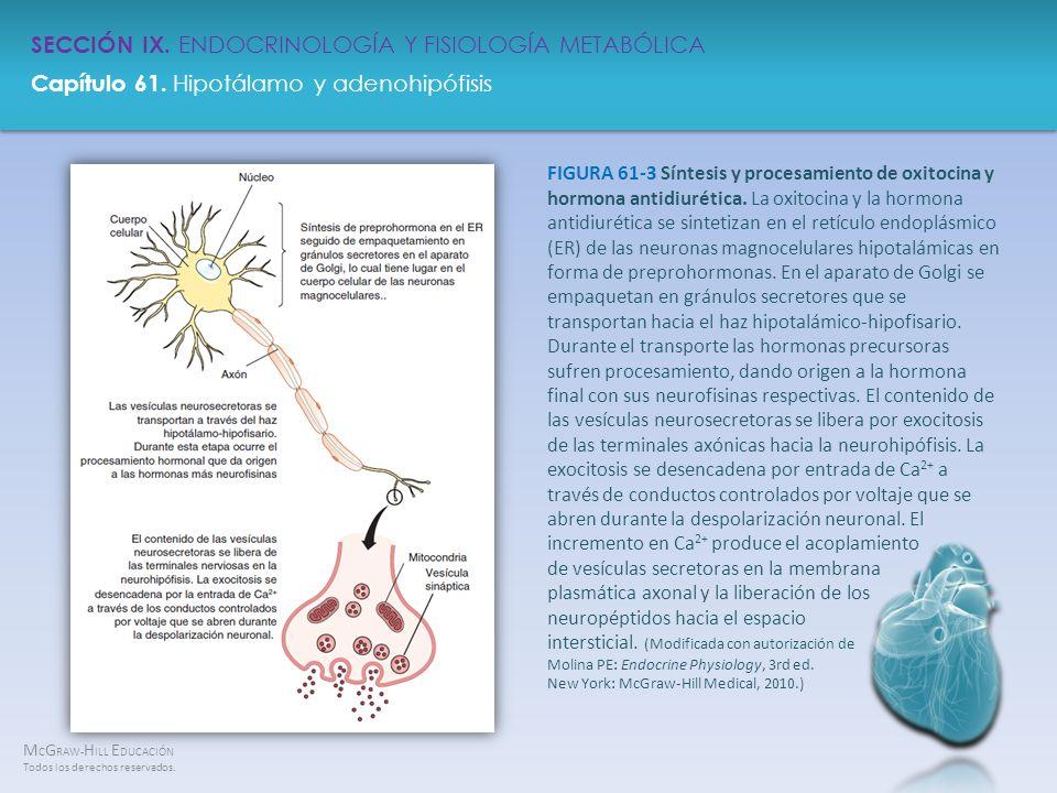 FIGURA 61-3 Síntesis y procesamiento de oxitocina y hormona antidiurética.