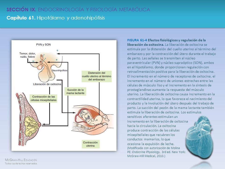 FIGURA 61-4 Efectos fisiológicos y regulación de la liberación de oxitocina.