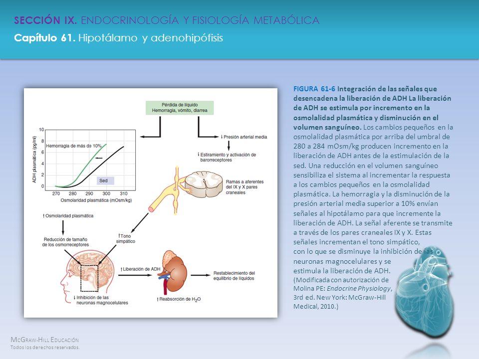 FIGURA 61-6 Integración de las señales que desencadena la liberación de ADH La liberación de ADH se estimula por incremento en la osmolalidad plasmática y disminución en el volumen sanguíneo.