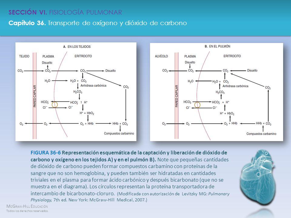 FIGURA 36-6 Representación esquemática de la captación y liberación de dióxido de carbono y oxígeno en los tejidos A) y en el pulmón B).