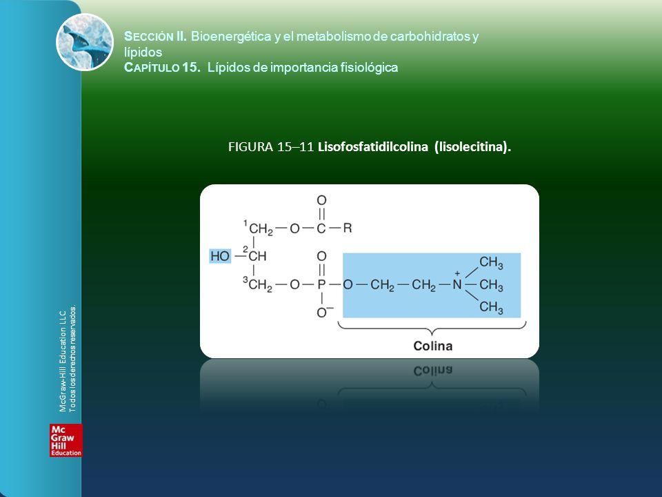 FIGURA 15–11 Lisofosfatidilcolina (lisolecitina).