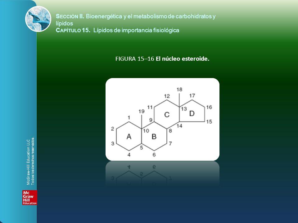 FIGURA 15–16 El núcleo esteroide.