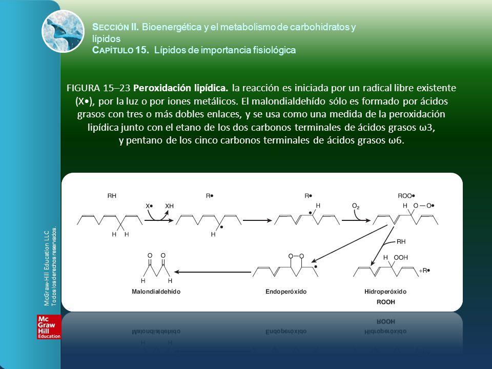 y pentano de los cinco carbonos terminales de ácidos grasos ω6.