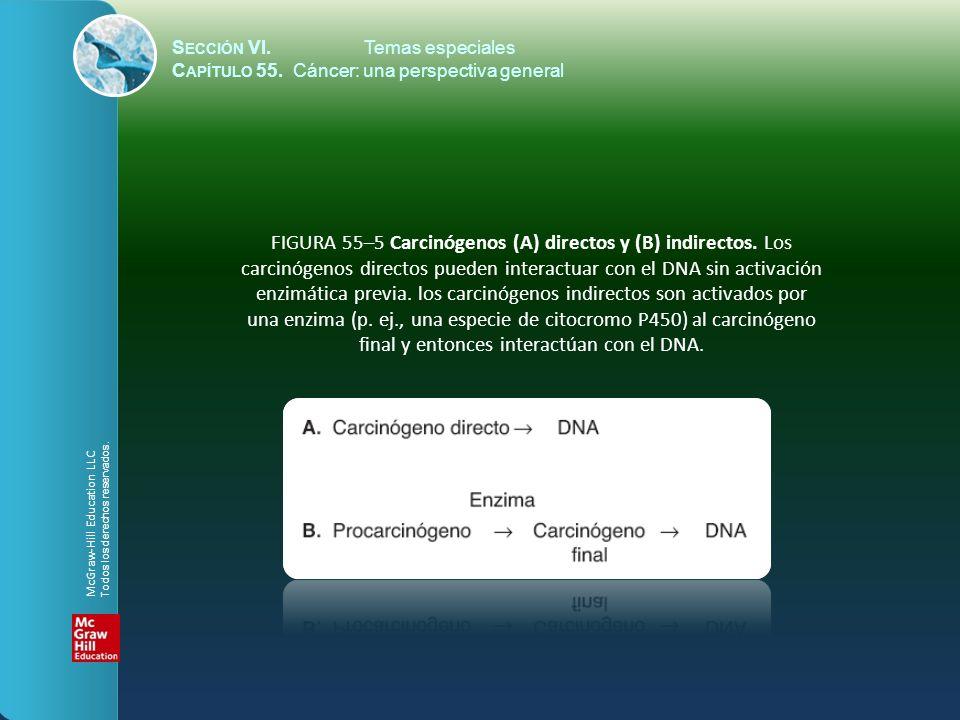 enzimática previa. los carcinógenos indirectos son activados por