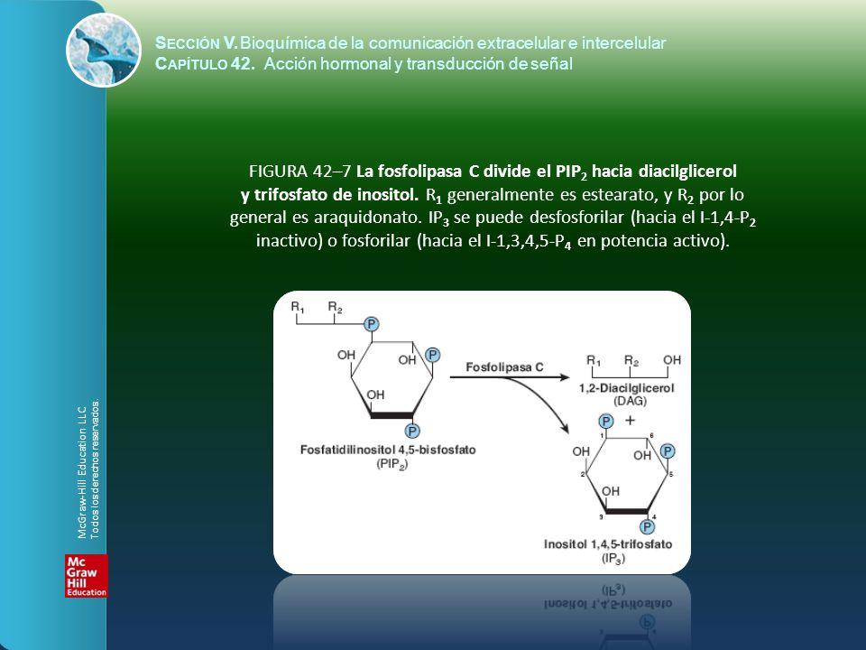 FIGURA 42–7 La fosfolipasa C divide el PIP2 hacia diacilglicerol
