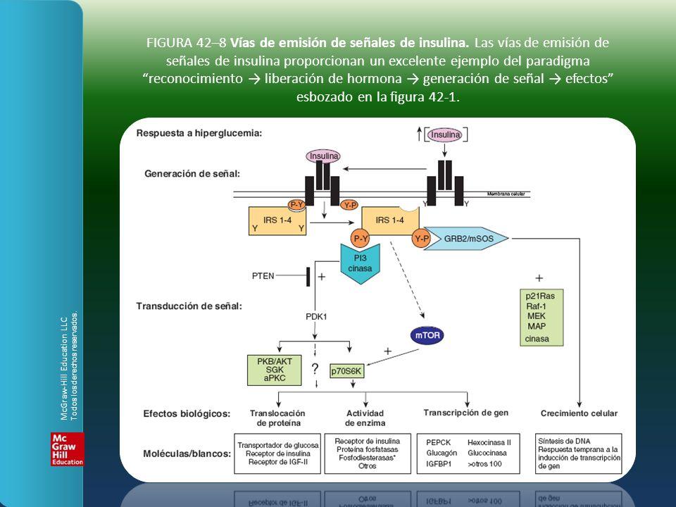 FIGURA 42–8 Vías de emisión de señales de insulina