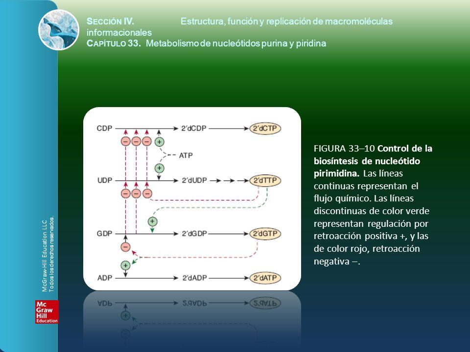 FIGURA 33–10 Control de la biosíntesis de nucleótido