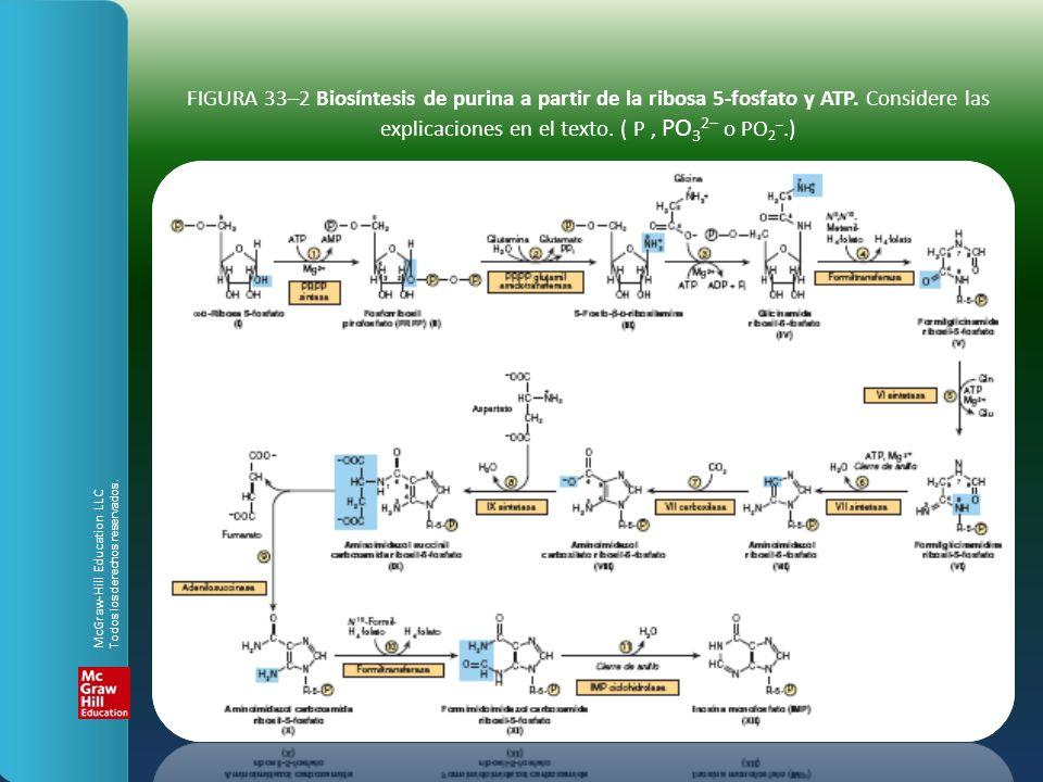FIGURA 33–2 Biosíntesis de purina a partir de la ribosa 5-fosfato y ATP. Considere las explicaciones en el texto. ( P , PO32– o PO2–.)