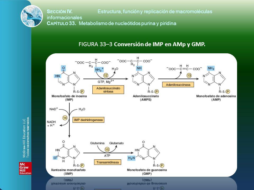 FIGURA 33–3 Conversión de IMP en AMp y GMP.