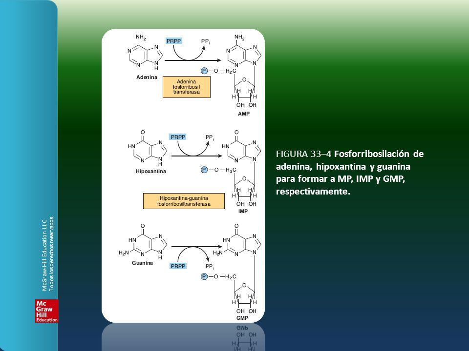 FIGURA 33–4 Fosforribosilación de adenina, hipoxantina y guanina para formar a MP, IMP y GMP, respectivamente.