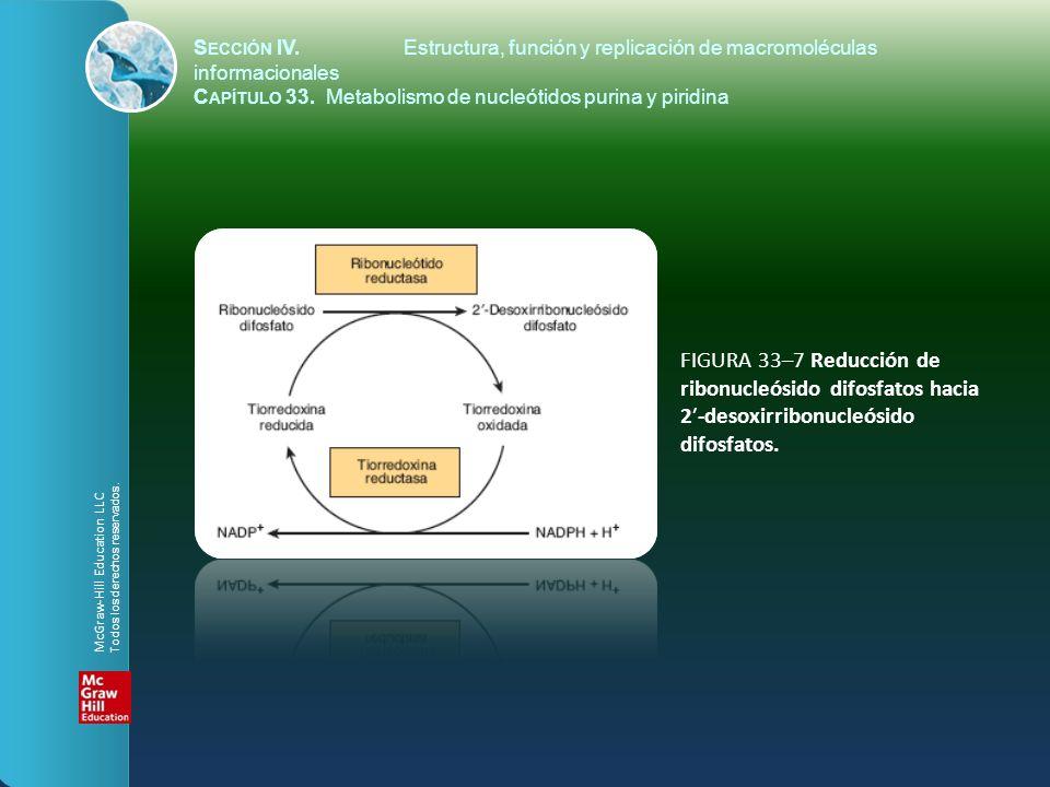 FIGURA 33–7 Reducción de ribonucleósido difosfatos hacia