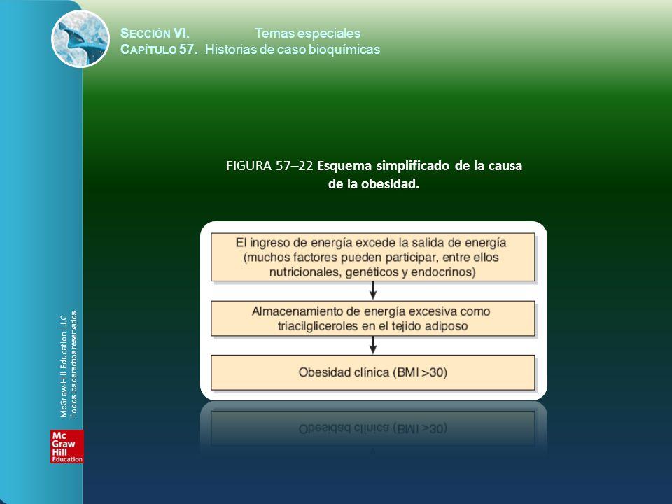 FIGURA 57–22 Esquema simplificado de la causa de la obesidad.