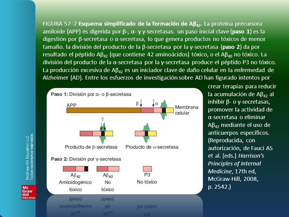 FIGURA 57–2 Esquema simplificado de la formación de Aβ42