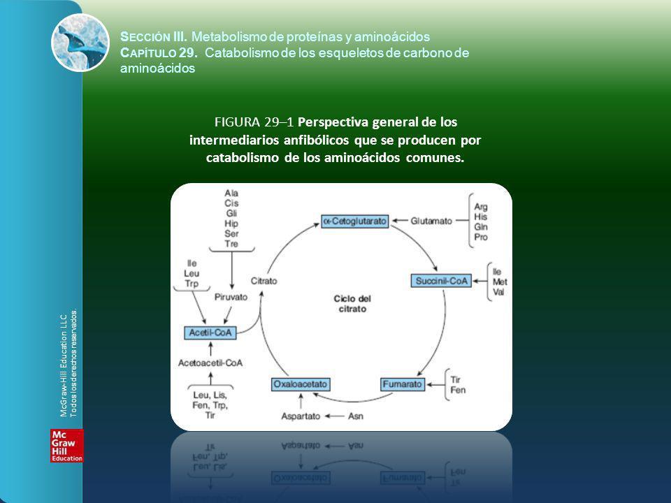 Sección III. Metabolismo de proteínas y aminoácidos