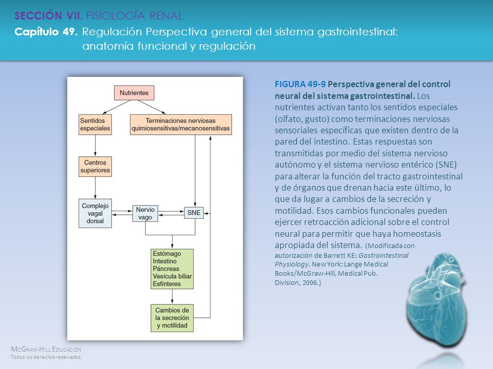 FIGURA 49-9 Perspectiva general del control neural del sistema gastrointestinal.