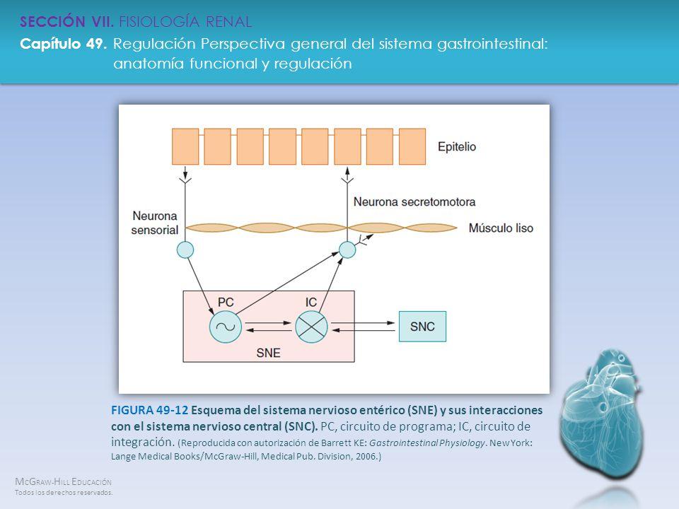 FIGURA 49-12 Esquema del sistema nervioso entérico (SNE) y sus interacciones con el sistema nervioso central (SNC).