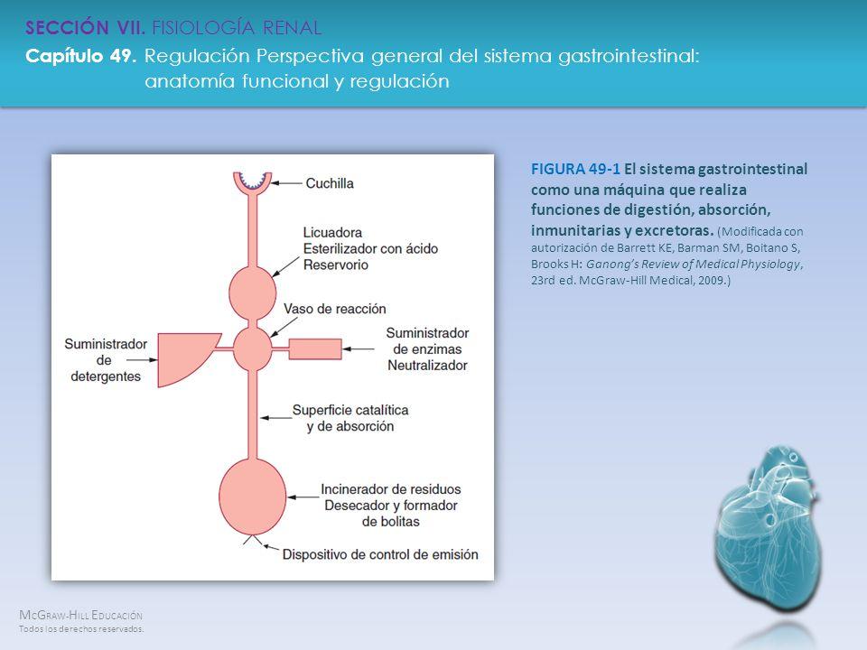 FIGURA 49-1 El sistema gastrointestinal como una máquina que realiza funciones de digestión, absorción, inmunitarias y excretoras.