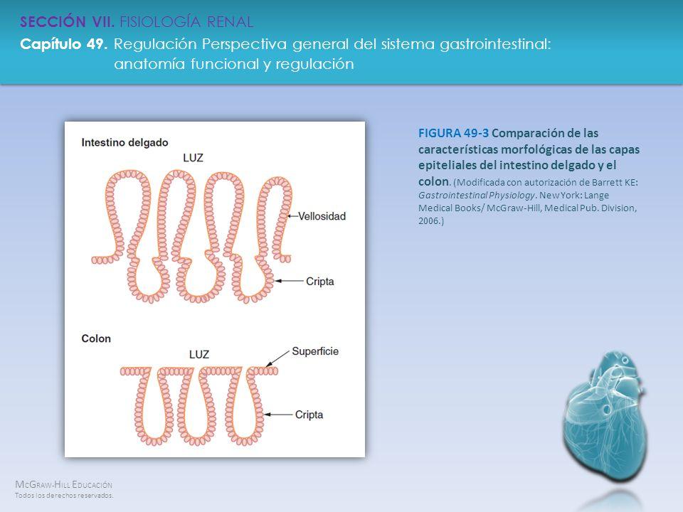 FIGURA 49-3 Comparación de las características morfológicas de las capas epiteliales del intestino delgado y el colon.