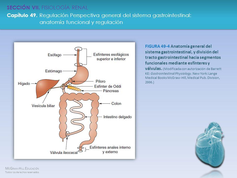FIGURA 49-4 Anatomía general del sistema gastrointestinal, y división del tracto gastrointestinal hacia segmentos funcionales mediante esfínteres y válvulas.