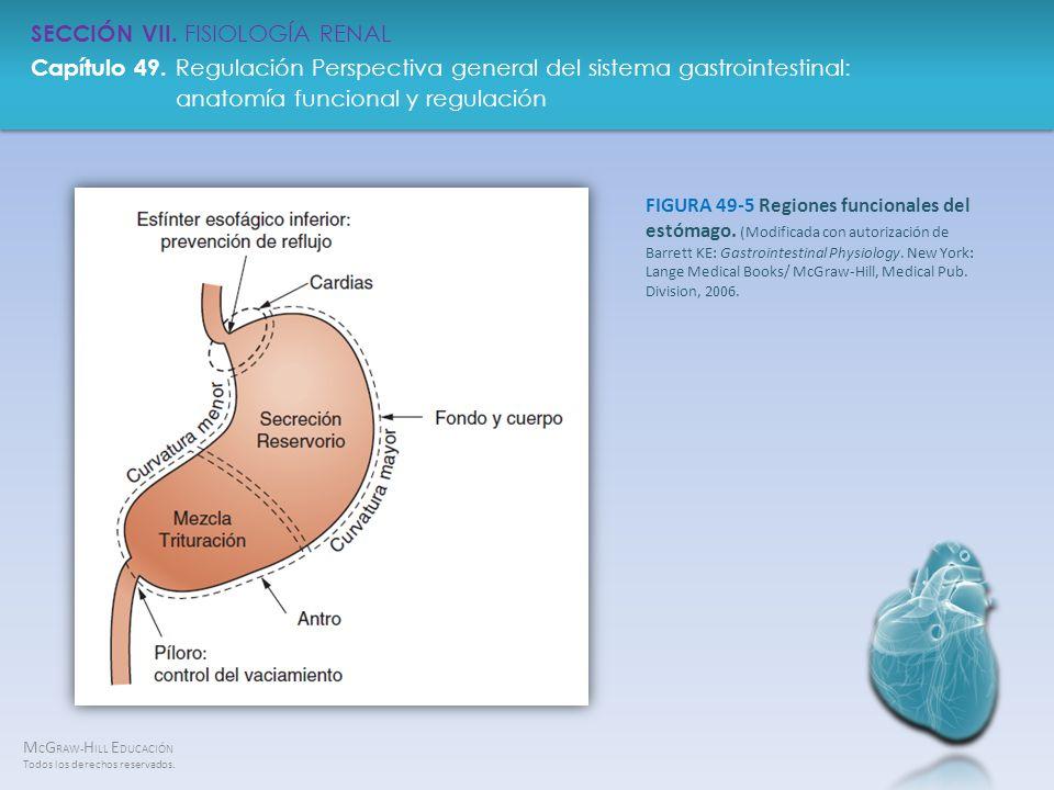 FIGURA 49-5 Regiones funcionales del estómago