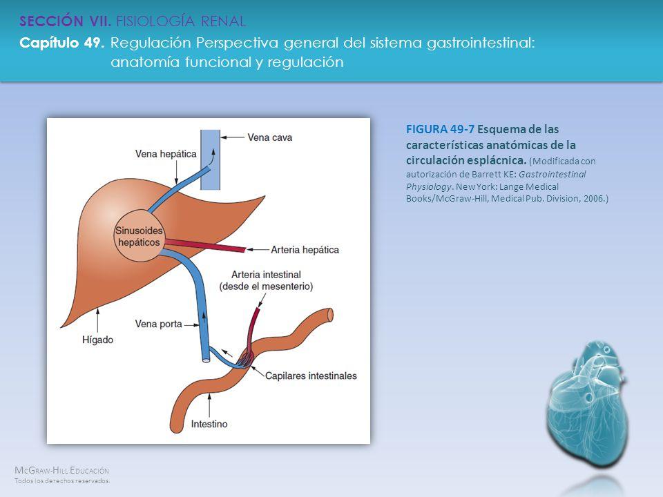 FIGURA 49-7 Esquema de las características anatómicas de la circulación esplácnica.
