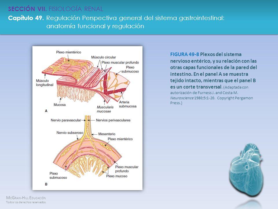 FIGURA 49-8 Plexos del sistema nervioso entérico, y su relación con las otras capas funcionales de la pared del intestino.