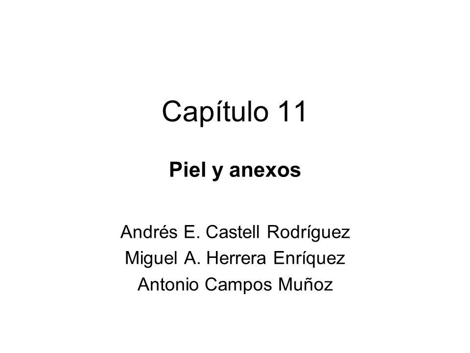 Capítulo 11 Piel y anexos Andrés E. Castell Rodríguez