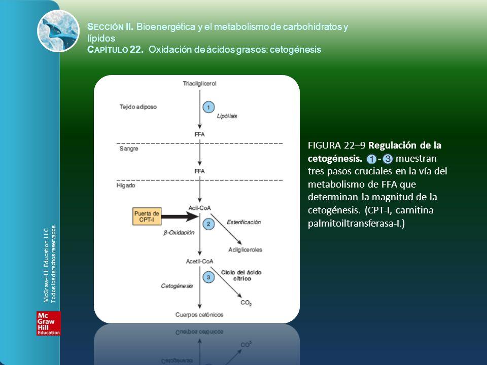 FIGURA 22–9 Regulación de la cetogénesis. - muestran
