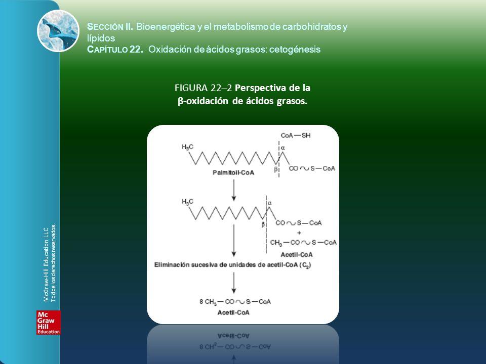 FIGURA 22–2 Perspectiva de la β-oxidación de ácidos grasos.
