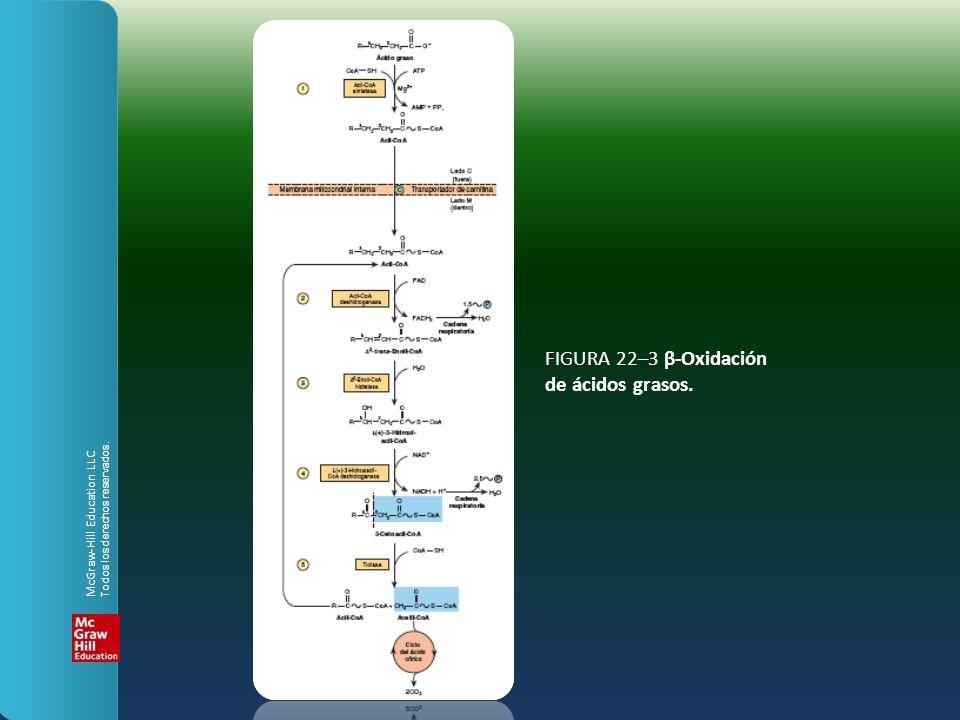 FIGURA 22–3 β-Oxidación de ácidos grasos.