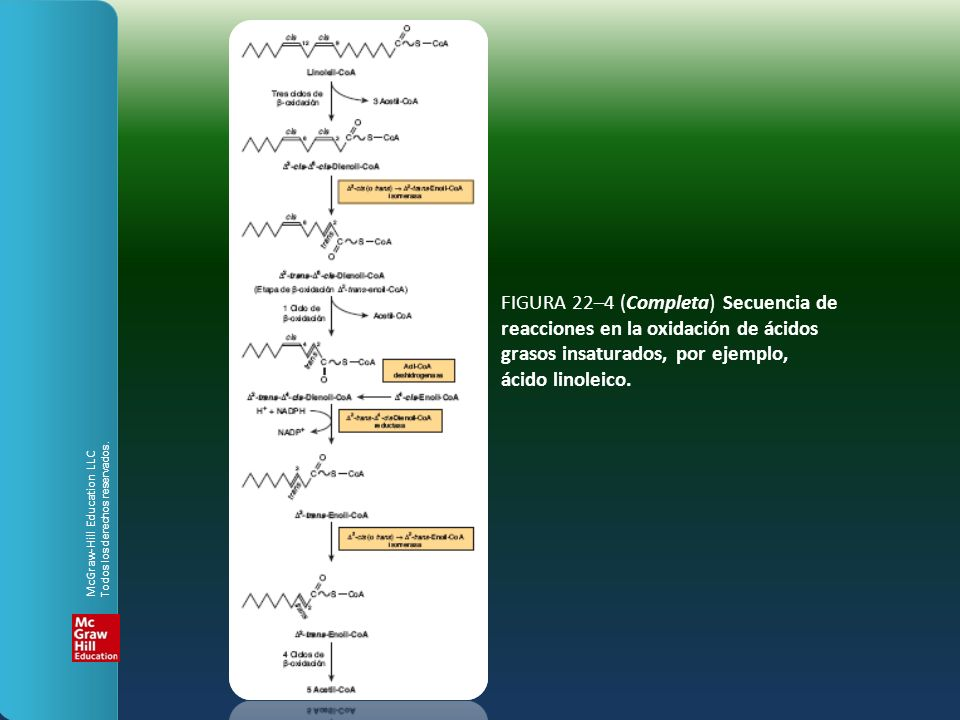 FIGURA 22–4 (Completa) Secuencia de reacciones en la oxidación de ácidos grasos insaturados, por ejemplo, ácido linoleico.