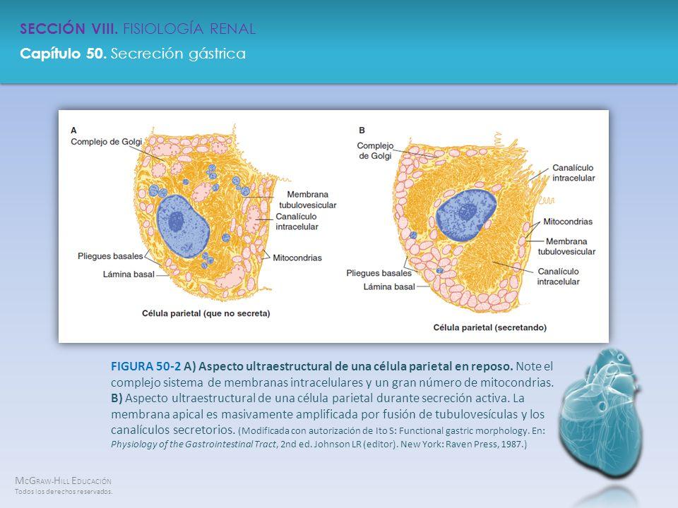 FIGURA 50-2 A) Aspecto ultraestructural de una célula parietal en reposo.