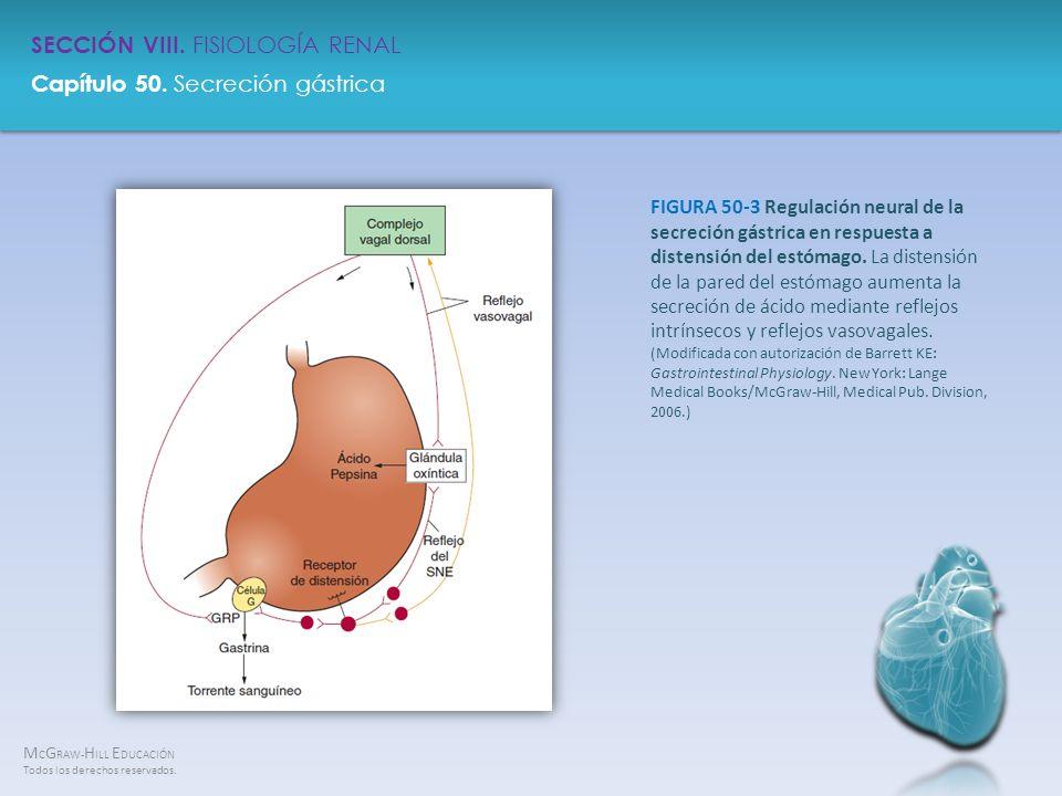 FIGURA 50-3 Regulación neural de la secreción gástrica en respuesta a distensión del estómago.
