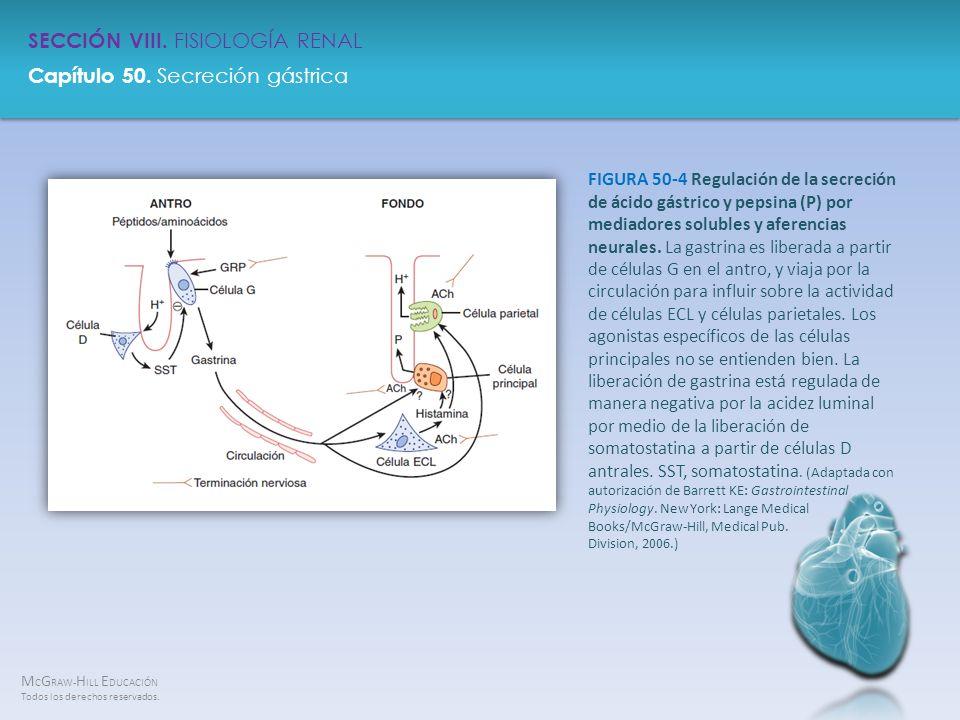 FIGURA 50-4 Regulación de la secreción de ácido gástrico y pepsina (P) por mediadores solubles y aferencias neurales.