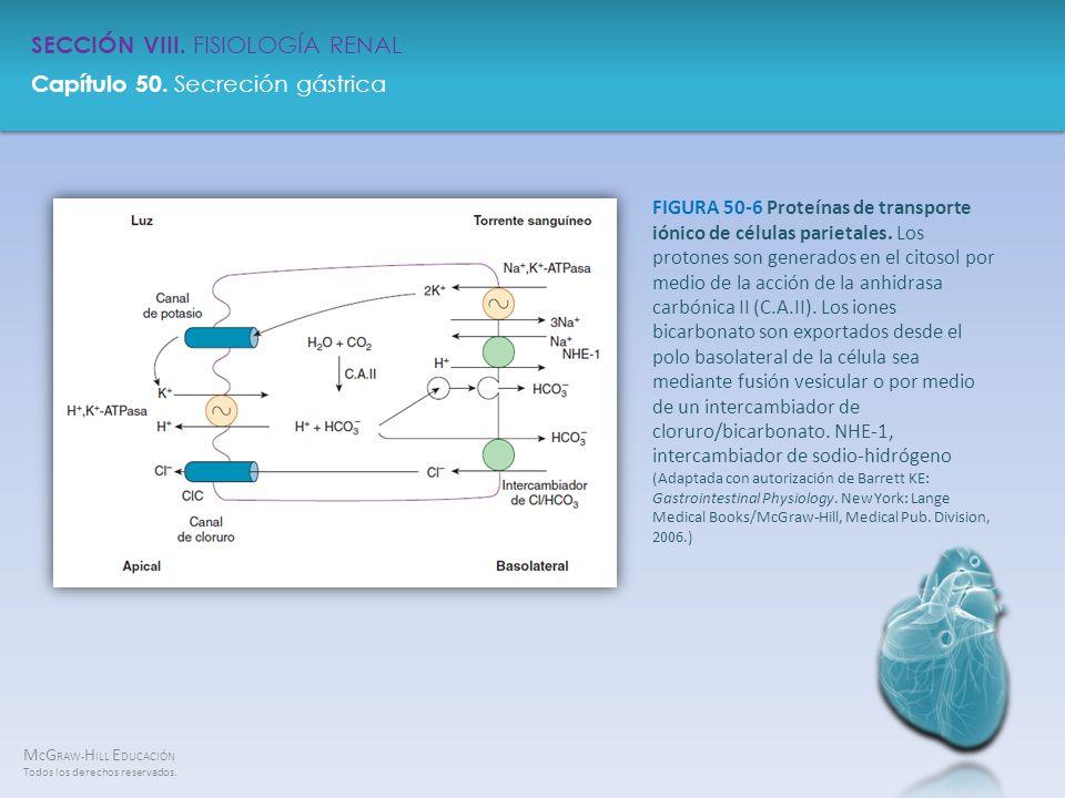 FIGURA 50-6 Proteínas de transporte iónico de células parietales